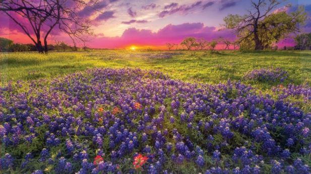 Texascooppower.com Win A Getaway to Fredericksburg Contest