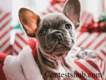 Most Wonderful Holiday Gifts Sweepstakes