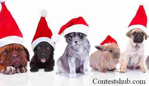 KOIT Santa Paws Pet Photo Contest