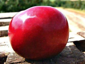Honeycrisp Apples Giveaway