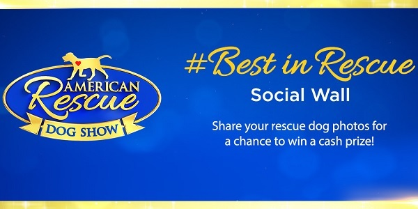 Best In Rescue At Home Contest