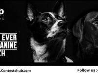 Jeep Brands Top Canine Search Contest