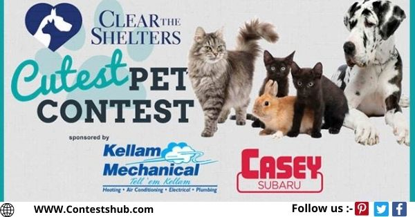 WAVY TV 10 Clear The Shelters Cutest Pet Contest