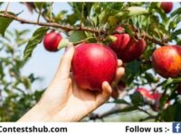 Apples From NY Giveaway