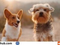 PCH $10000 Animal Lovers Sweepstakes