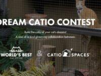 World Best Cat Litter Dream Catio Contest